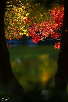 ~~autumn glow ~ glowing autumn leaves by * Yumi *~~ Beautiful World, Beautiful Places, Belleza Natural, Temples, Autumn Leaves, Mother Nature, Natural Beauty, Scenery, Seasons