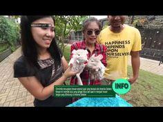 Bermain dan tidur bersama hewan peliharaan di Mj's Kennel Boarding House