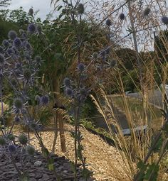 Garden Design and Build all-in-one solution based in Salisbury, Wiltshire Planting, Garden Design, Building, Flowers, Plants, Buildings, Landscape Designs, Royal Icing Flowers, Flower