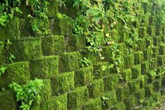 Grow moss on inexpensive cinder blocks                              …
