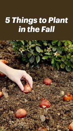 Planting Fruit Trees, Home Flowers, Family Garden, Fall Plants, Plant Care, Flower Beds, Garden Planning, Garden Landscaping, Gardening Tips