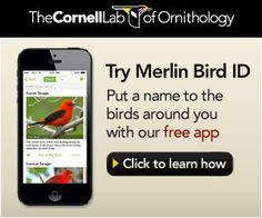 Inside Birding - Learn how to better identify birds.  Cornell Lab of Ornithology