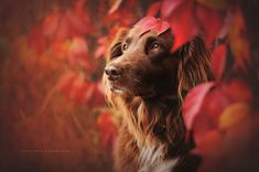 Anne-Geier- dog & leaves