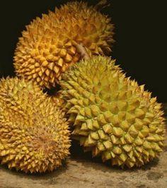 Le durian (origine : Asie du sud-est)