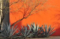 DESERT COURTYARD HOUSE   Steve Martino Landscape Architect