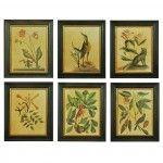 Framed Vintage Natural History Prints, Set of 6