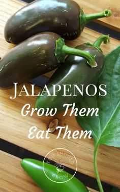 How to grow and eat jalapenos. Tons of recipes and ideas.
