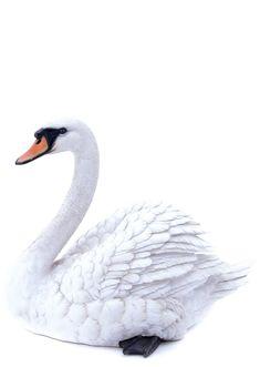 White Swan Garden Statue