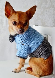 ☆Pleas note: you must give your dogs measurements in Buyers Comment section when placing the order for this sweater to ensure accurate fit. Please follow directions below. If I do not receive measurements at the time of order the sale will be cancelled and you will be issued a refund.☆  The Oxford Crochet sweater for your little lap dog!  Smart sophisticated doggies only, please! : ) Attached Bowtie is to die for but does NOT come off.  The Oxford Dog Sweater is available in 3 sizes so BE…