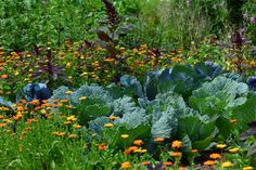 Online Permaculture Design Course PDC) PLUS Advanced Certificate in Soc. Indoor Vegetable Gardening, Gardening Zones, Vegetable Garden Design, Organic Gardening Tips, Gardening Blogs, Perennial Vegetables, Organic Vegetables, Growing Vegetables, Permaculture Design
