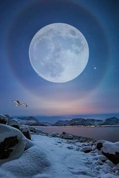 Moon dog and a seagull. Moon Photos, Moon Pictures, Moon Over Water, Full Moon Tonight, Mystic Moon, Shoot The Moon, Moon Magic, Amazing Sunsets, Super Moon