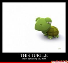 the superiority of turtles