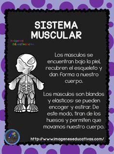 El Cuerpo Humano; Aparatos y Sistemas para Primaria (7) - Imagenes Educativas
