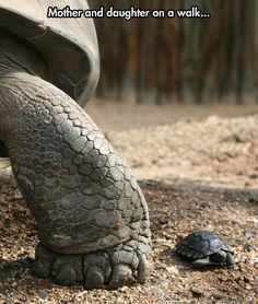Tortoise Scale
