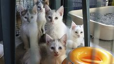Cary Man Behind YouTube Cat-Lebrities Helps Rescue 39 Cats Abandoned In Barrington