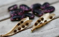 What you need to know to get started with seed saving.
