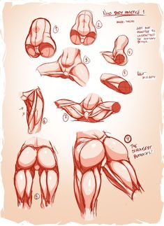 Nsio Body Practice1: Muscles of the Inner-thigh by Nsio on DeviantArt