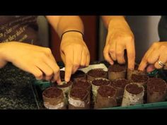 Tutorial on how to use toilet paper rolls to start seed. Reuse, reduce, recycle! Definitely doing this!