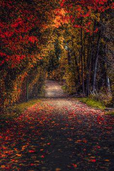 A Fall, Autumn, Halloween, Thanksgiving Blog.