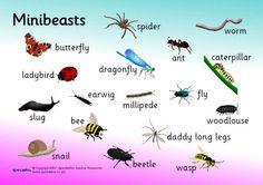 Minibeast word mat