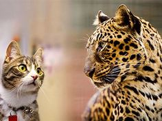 """What Exotic Pets Have a """"Green Card"""" In The USA?"""