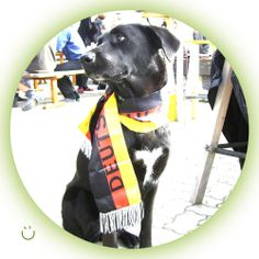 Our JOYSSI moment. Petra's dog Vega presents herself as fan and is getting ready – she keeps her paws crossed!  #wm2014 #pawscrossed #germany #soccerdog