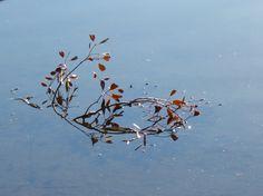 Branch in pond