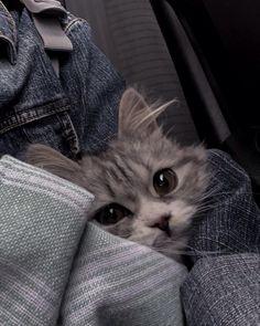 Cute Baby Cats, Cute Little Animals, Kittens Cutest, Cute Babies, Baby Kitty, Kitty Kitty, Cute Cat Wallpaper, Mood Wallpaper, Cute Creatures