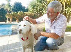 Cão de Grândola encontrado 539 dias depois em Gondomar