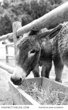 Gerhard & Jana's Organic Wedding Celebration Beautiful Horses, Animals Beautiful, Cute Animals, Wedding Pics, Farm Wedding, Wedding Barns, Organic Farming, Organic Gardening, Outdoor Wedding Inspiration
