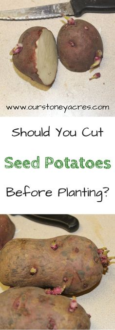 Cutting Seed Potatoes. Cutting Seed Potatoes before Planting is a common planting practice that will save seeds and produce more plants in your garden.