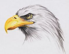 bald eagle by highdarktemplar traditional art drawings animals 2005 . Bird Drawings, Colorful Drawings, Animal Drawings, Cool Drawings, Drawing Sketches, Sketching, Eagle Drawing, Lion Drawing, Eagle Painting