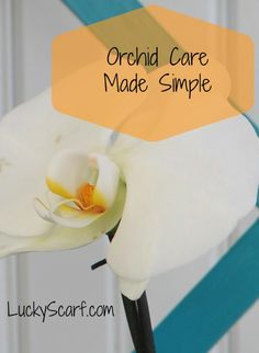 Orchid Care Made Sim