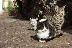 Abandoned cats and kittens in a village of Madeira Portugal Stock Photo - 24260385
