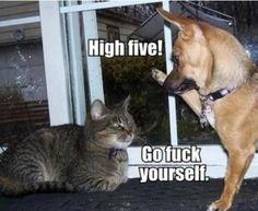 High five dog