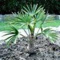 Verzorging van uw exotische planten na hun winterrust Nerium, Plants, Gardens, Exotic, Flora, Plant