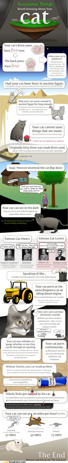 Cat facts. #cat #humor #cats #funny #lolcats #humour #meme #cute #quotes =^..^= www.zazzle.com/kittyprettygifts