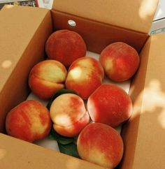 peach, fruit, and food image Peach Aesthetic, Aesthetic Food, Summer Aesthetic, Think Food, Love Food, Food Bakery, Eat This, Tasty, Yummy Food