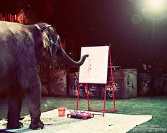 Whimsical Circus Elephant Photograph  Elephant by summerowens, $15.00