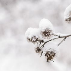 winter snow//
