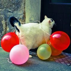 party cat goin' to a party #celebrateeveryday