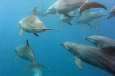 Swimming with dolphins in Zanzibar Photo by Dan Mirica — National Geographic Your Shot