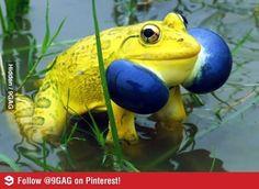 정말 신기한 개구리 사진 http://i.wik.im/103070