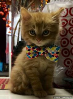 photogenic kitten