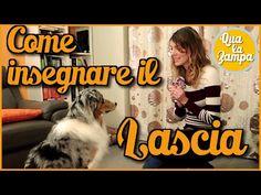 Addestramento/Educazione cani n°13 - Come insegnare il LASCIA  Qua la Zampa