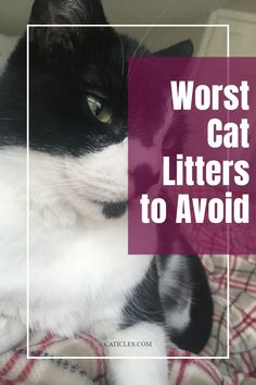 Looking for the best cat litter? Unfortunately, many cat litters on the market aren't safe to breathe in, ingest, or mix with moisture. Some cat litter dust can cause cancer, some litters can grow deadly mold, and others just aren't what cats prefer. I've included studies and resources to learn more about why these cat litters are dangerous and the cat litter that I use right meow. I've worked with over 400 cats and tested every type of cat litter. Check out the guide today! Best Cat Litter, Litter Box, Calming Cat, Sick Cat, Mean Cat, Clumping Cat Litter, Cat Sitter, Types Of Cats, Cat Care Tips