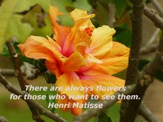 Happiness Messages, Henri Matisse, Happy, Flowers, Plants, Florals, Plant, Flower, Bloemen