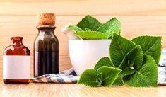Rýmovník pomáhá nejen s rýmou, vypěstuje ho i amatér - Vitalia. Oregano Oil Benefits, Herbs For Anxiety, Healthy Herbs, Health Benefits, Herbalism, Smoothie, Health Fitness, Canning, Plants