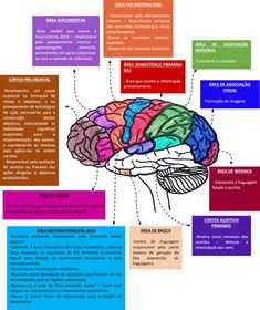 Mental Maps, Córtex Cerebral, Brain Gym, College Hacks, Beautiful Mind, Crochet Crafts, Medicine, Geek Stuff, Mindfulness