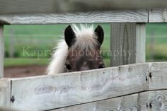 Hide and Seek 8x10 Fine Art Photography Print by KaprysPhotography, $20.00